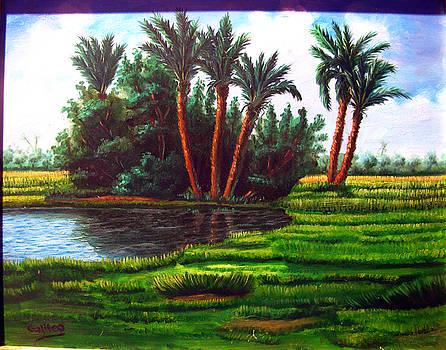 Rural Egypt by Galileo Art