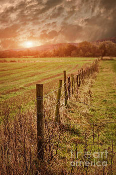 Rural farmland fence by Sophie McAulay