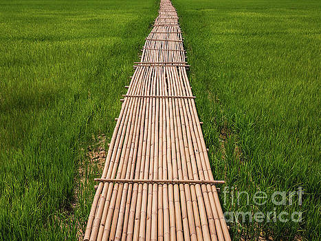 Rural Green rice fields and bamboo bridge. by Tosporn Preede