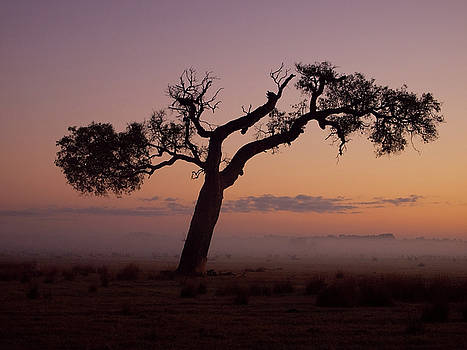 Rural Mist At Sunrise by Heather Thorning
