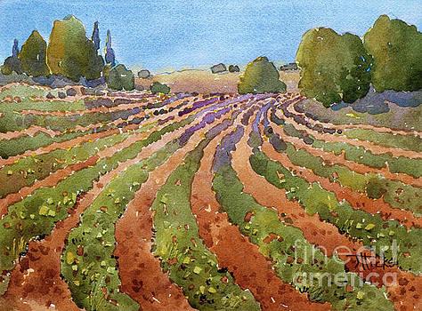 Rural Rhythm by Joyce Hicks