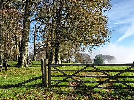 Rural Somerset - November by Susie Peek