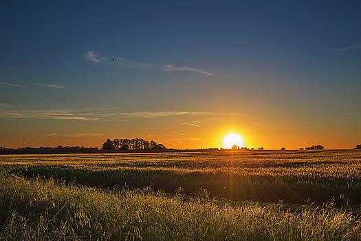Rural sunset over Argentina Fields by Alfredo Rougouski