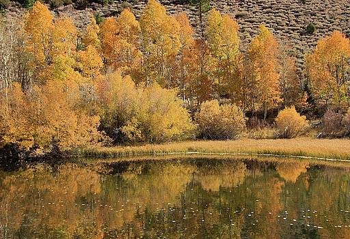 Rush Creek Autumn by Sean Sarsfield