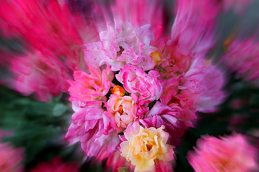 Rush of Colour by Sonja Bonitto