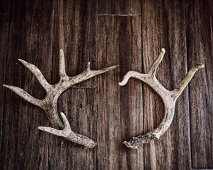 Rustic Antler Photography by Lisa Russo