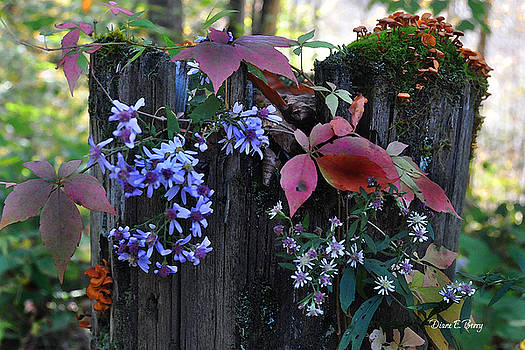 Rustic Bouquet by Diane E Berry