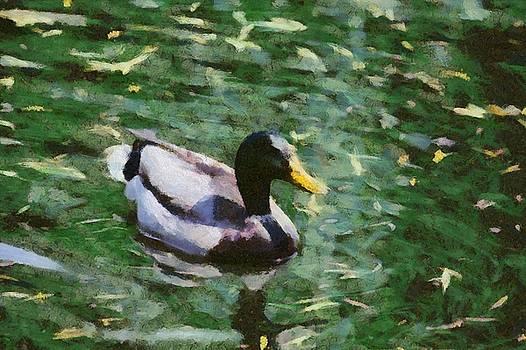 Rustic Duck by Chris Bird