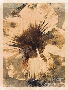 Rustic Hibiscus by Barbara Griffin