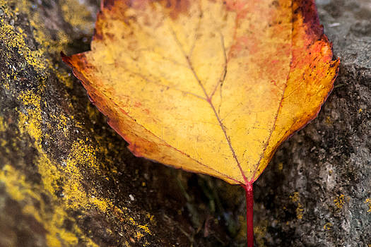 Rustic Leaf by Crystal Hoeveler