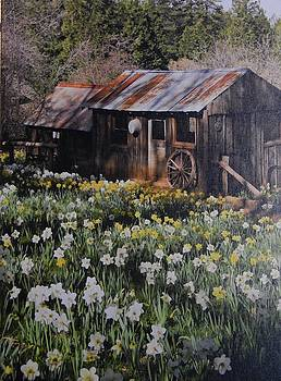 Rustic Living  by Susan Ince