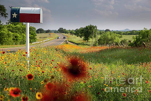 Herronstock Prints - Rustic Texas flag mailbox surrounded by colorful wildflowers, Te