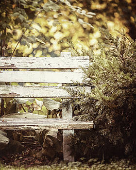 Rustic White Bench in the Woods by Lisa Russo