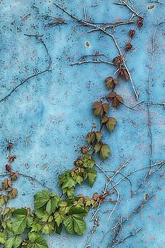 Rusty Blue by Elaine Farrington Johnson