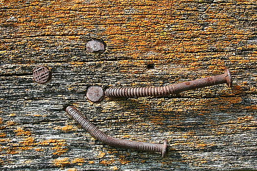 Rusty Nails on Weathered Wood by Ajp