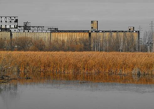 Rusty Reeds by Gothicrow Images