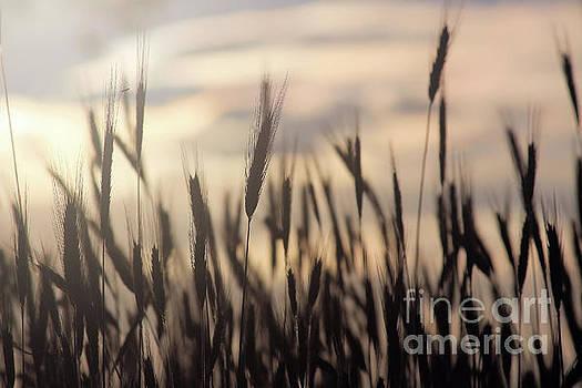 Rye in the Sky by Kristi Beers-Mason