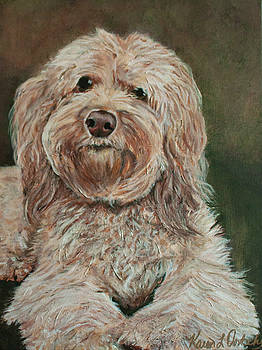 Ryelee the Aussiedoodle by Karen Dortschy
