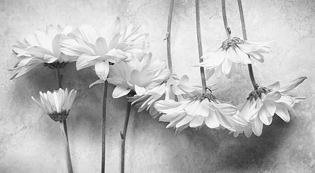 Rythm Black and White by Dw Johnson