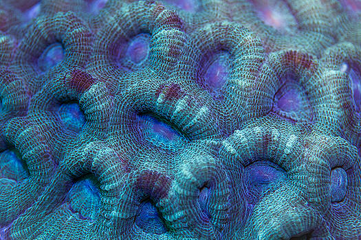 Ryukyu blue by Shawn  Miller