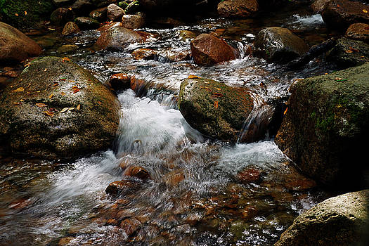 Sabbaday Brook by Bill Morgenstern