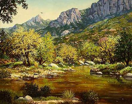Sabino Canyon by W  Scott Fenton