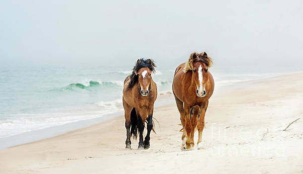 Sable Island Wild Horses by Heather Swan