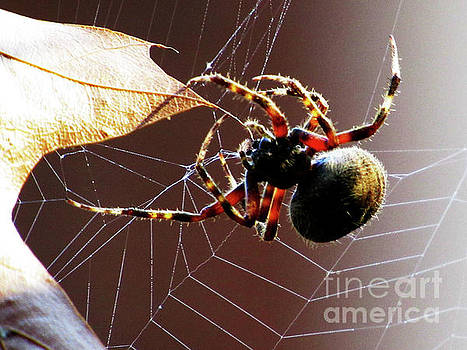 Sac Spider Catches a Leaf by Ron Tackett