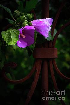 Svetlana Sewell - Sad Flowers