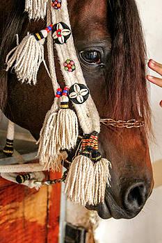 Sad Horse by Ehab Amin