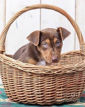 Sad Puppy by Edward Fielding