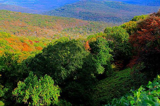 Saddle Canyon N W Arkansas by Carolyn Wright