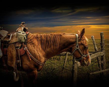 Randall Nyhof - Saddle Horse on the Prairie
