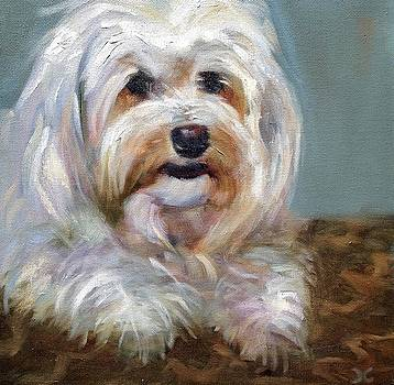 Sadie by Cynthia Mozingo