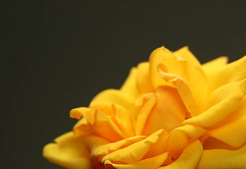 Saffron Mini Rose by Marna Edwards Flavell