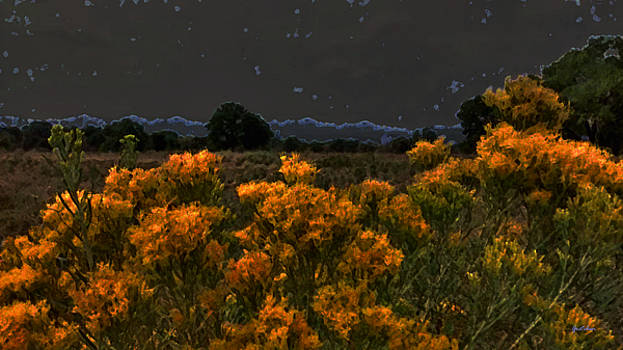 Sagebrush at Night under Starry Sky by Gretchen Wrede
