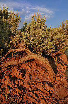 Sagebrush At Sunset by Ron Cline