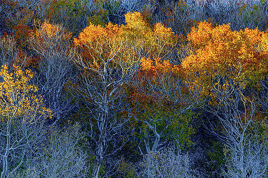 Sagehen Summit, Mono County by Daniel Danzig