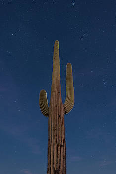 Saguaro At Night by Steve Gadomski