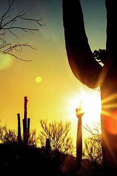 Saguaro Cactus Silhouette at Colorful Sunrise by Susan Schmitz