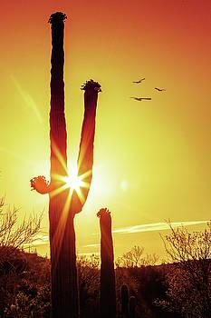Saguaro Cactus Silhouette at Sunrise by Susan Schmitz