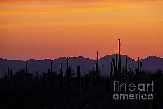 Bob Phillips - Saguaro Country Sunset Three