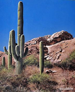 Saguaro National Monument by Joe Roselle