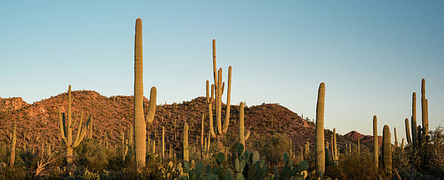 Saguaro National Park Desert Sunrise Panorama by Steve Gadomski