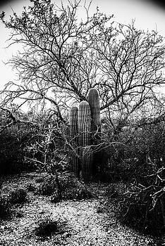 Saguaro National Park  by Kevin Blackburn