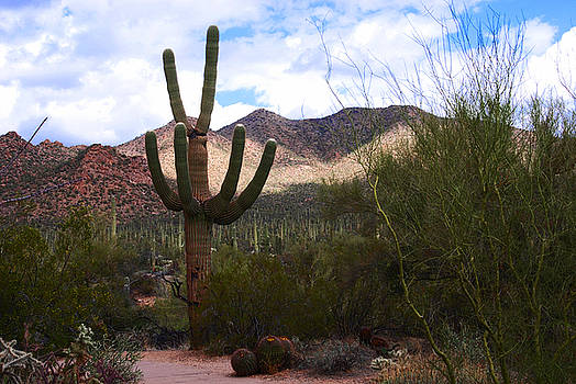 Susanne Van Hulst - Saguaro National Park