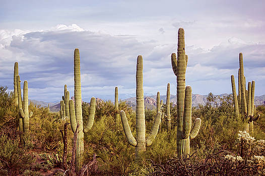 Saguaro Party by Ryan Seek