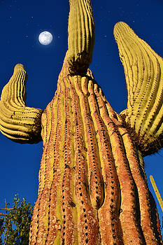 Saguaro Reaching to the Sky by John Hoffman