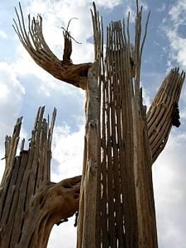 Saguaro Skeletons by Audrey Kanekoa-Madrid