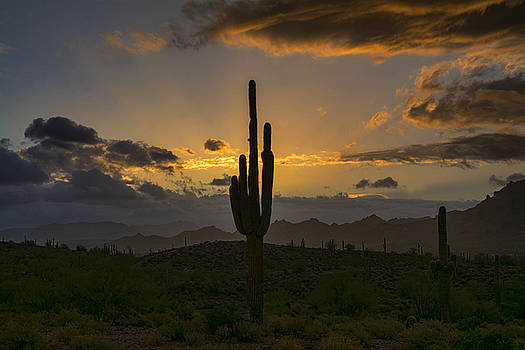 Saija Lehtonen - Saguaro Sunrise in the Sonoran Desert